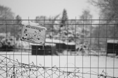 winter_03_miko