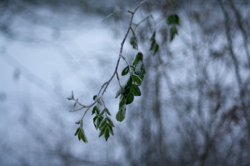 winter_09_miko