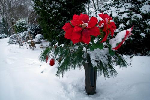 winter_11_miko