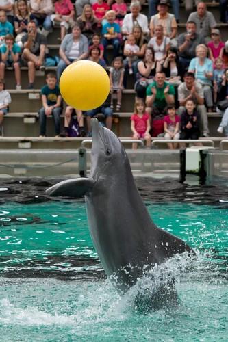 zoo_delfin_01_miko