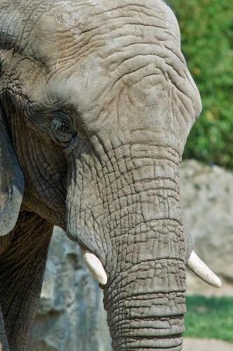 zoo_elefant_01_miko